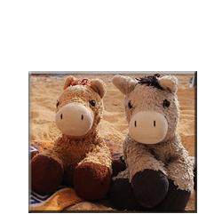 Esel und Pferdtis Urlaubsziele